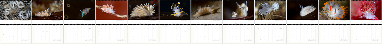 Nudibranchs of the Pacific Northwest, 2013 Calendar Months